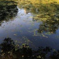 Старинный пруд :: Lеsя Sеmейкинa