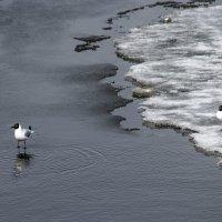 В ожидании большой воды :: Сергей Елесин