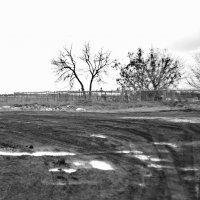 У деревенского кладбища. Апрель. :: Михаил Полыгалов