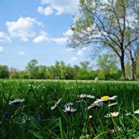 Земля в цвету!!!! :: Galina Dzubina
