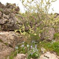 цветы в горах :: vladimir polovnikov