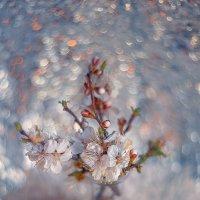 Нежность весны :: Natali