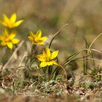 Весенние цветы :: Roman Arnold