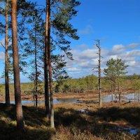 Апрельские прогулки по лесу :: Татьянка *