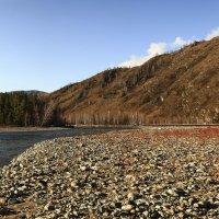 Берега реки Чарыш :: Сергей Жуков
