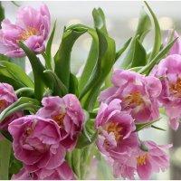 Тюльпаны весенние :: ZNatasha -