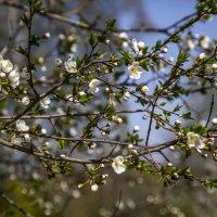 Весна :: Ольга Милованова