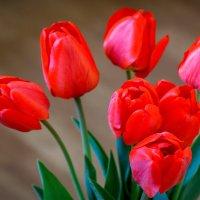 Опять весна, опять цветы, опять сбываются мечты... :: Лилия Масло
