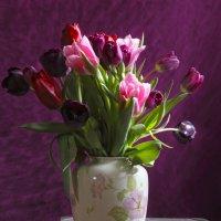 Тюльпаны :: Татьяна Панчешная