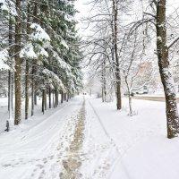 Зима все не уходит  :: Владислав Левашов