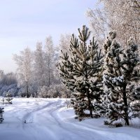 Зимний пейзаж :: lyudmila Курлова