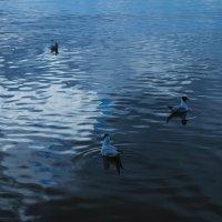 Финский залив, чайки. :: Serge Lazareff