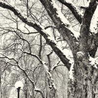 Заснеженным парком. :: Андрий Майковский