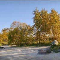 Деревья в осеннем наряде :: lady v.ekaterina