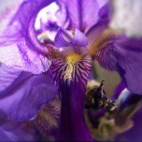Как красив цветка подлунный лик, лепестков живое наважденье... :: Людмила Богданова (Скачко)