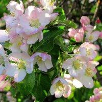 Нежные оттенки весны! :: Жанна