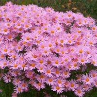 Цветы осени :: Генрих