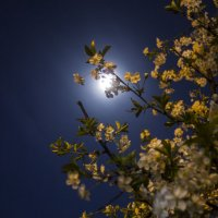 Лунная ночь :: Владимир Стаценко