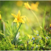 Любуйся, дыши, мечтай. Ароматом весны себя впечатляй. :: Антон Сологубов