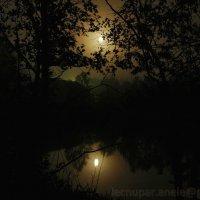 Луна в реке :: Elena Gosteva