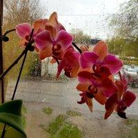 Снова дождь... :: Anna Gornostayeva