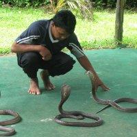 Заклинатель змей :: ИРЭН@ .