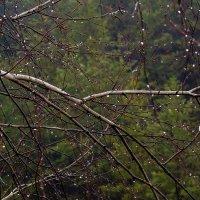 Апрельский дождь :: Вера Сафонова