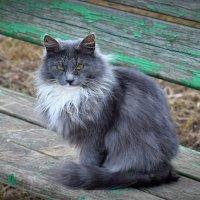 Аксакал (белая борода)! :: Татьяна Помогалова