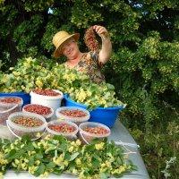За ягодами) :: Елена Салтыкова(Прохорова)