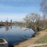 Весна в любимом парке :: Людмила Монахова