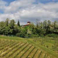 Вилла с виноградниками :: Natali Positive