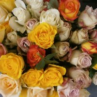Розы :: Алёна Савина
