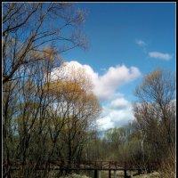 Там, где живет ондатра :: Pepsovich