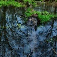 В зеркале лесной реки :: Сергей Шаталов