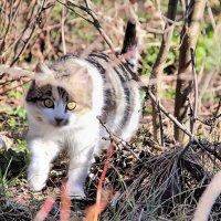 Кошка :: Евгений Верзилин