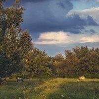 Хорошо в деревне летом. часть-2 :: Юрий Клишин