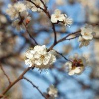 Весна :: Надежда