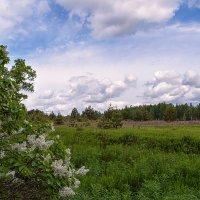 Пейзаж с белой сиренью. :: Елена Струкова
