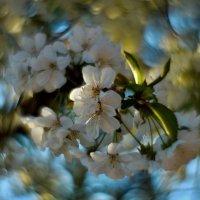 Кружево весны.. :: владимир