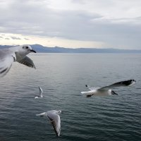 Летая с птицами (1) :: Tatiana Belyatskaya