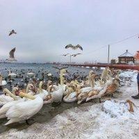 Февральский день у лебедей. . :: Вахтанг Хантадзе