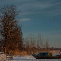 Морозное утро :: Владимир Колесников
