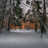 Тропа из леса :: Александр Попович