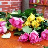 Розы :: Лариса