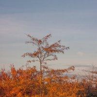 Осень в гледичиевой роще :: Алина Шостик