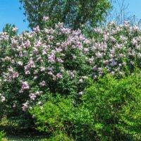 Весна в нашем парке :: Варвара