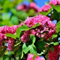 краски весны :: Мария Климова