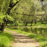Дорожки в парке. :: barsuk lesnoi