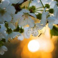 Паучок и весна :: Оксана Ильченко