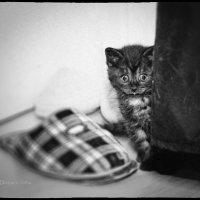 Про страхи :: Ирина Ден